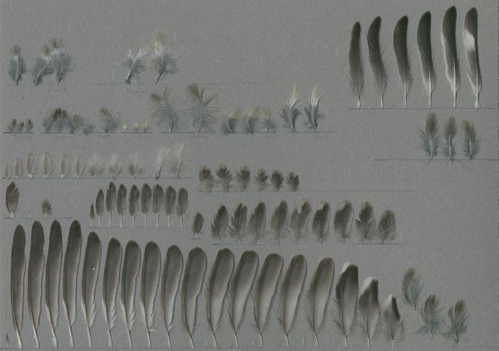 Bild von Federn der Art Spinus psaltria (Mexikanerzeisig)