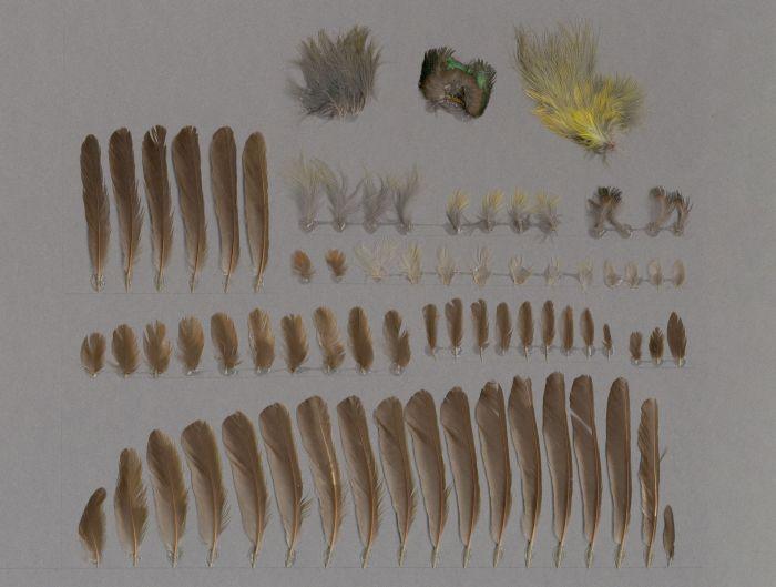 Bild von Federn der Art Anthreptes malacensis (Braunkehl-Nektarvogel)