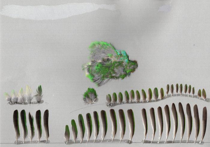 Bild von Federn der Art Dacnis cayana (Blaukopfpitpit)