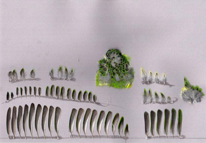 Bild von Federn der Art Tangara guttata (Fleckentangare)