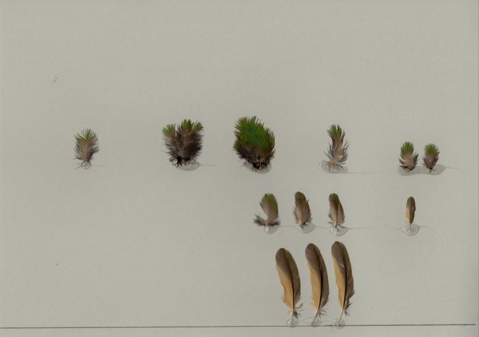 Bild von Federn der Art Galbula cyanicollis (Gelbschnabel-Glanzvogel)