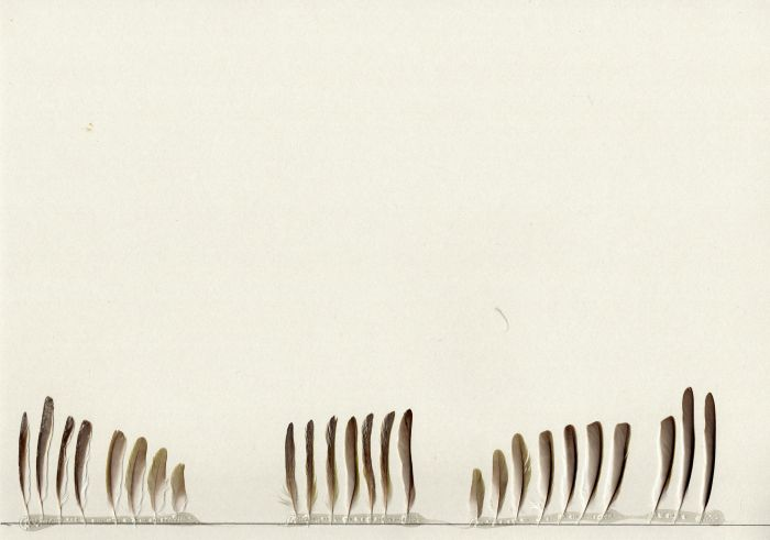 Bild von Federn der Art Zosterops erythropleurus (Rostflanken-Brillenvogel)