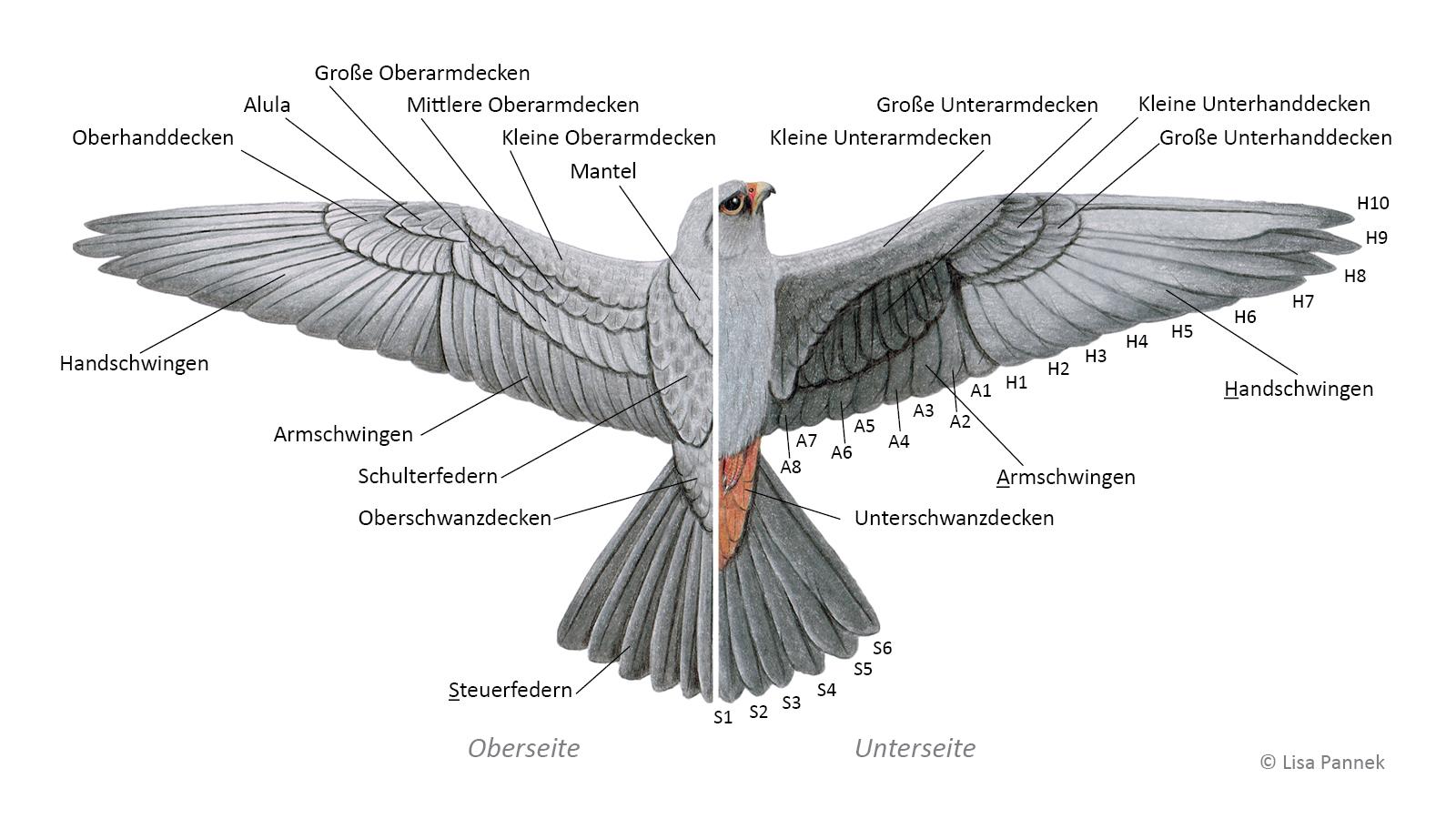 Featherbase