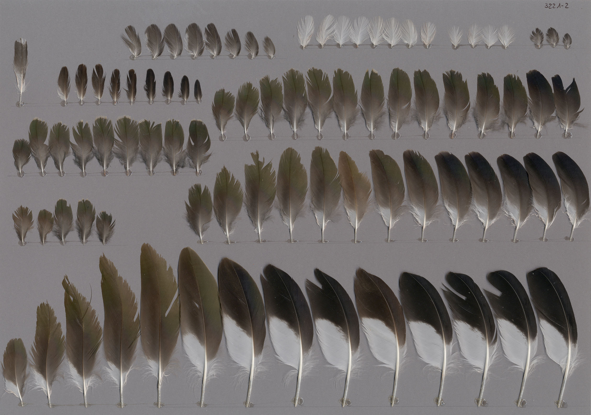trockenlegen von feuchtwiese