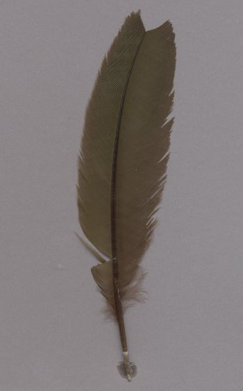 Exhibit of the species Coua gigas