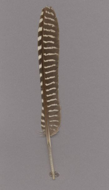 Exhibit of the species Eudromia elegans