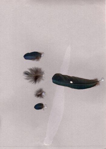 Bild von Federn der Art Phoeniculus purpureus (Baumhopf)