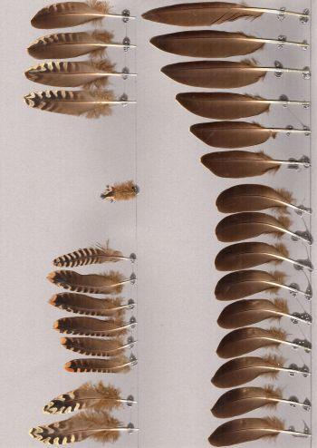 Bild von Federn der Art Pterocles lichtensteinii (Wellenflughuhn)