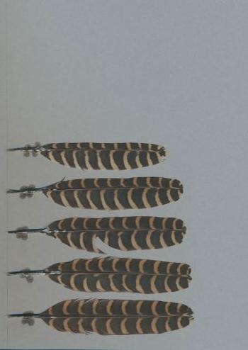 Bild von Federn der Art Eudynamys scolopaceus (Indischer Koel)
