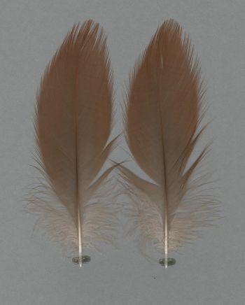 Bild von Federn der Art Lophotibis cristata (Schopfibis)
