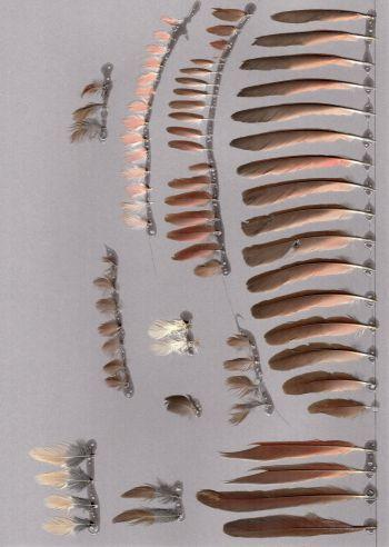 Exhibit of the species Cardinalis cardinalis