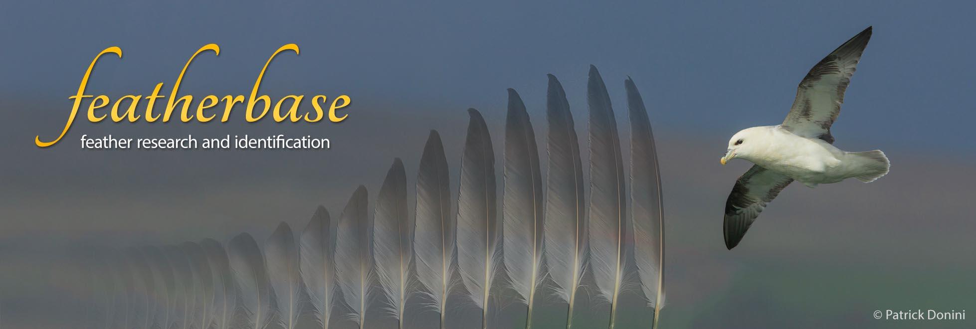 Seitenbanner mit offiziellem Logo